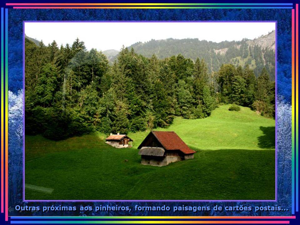 Casas de colonos sem cercas, no meio dos campos, com total segurança...