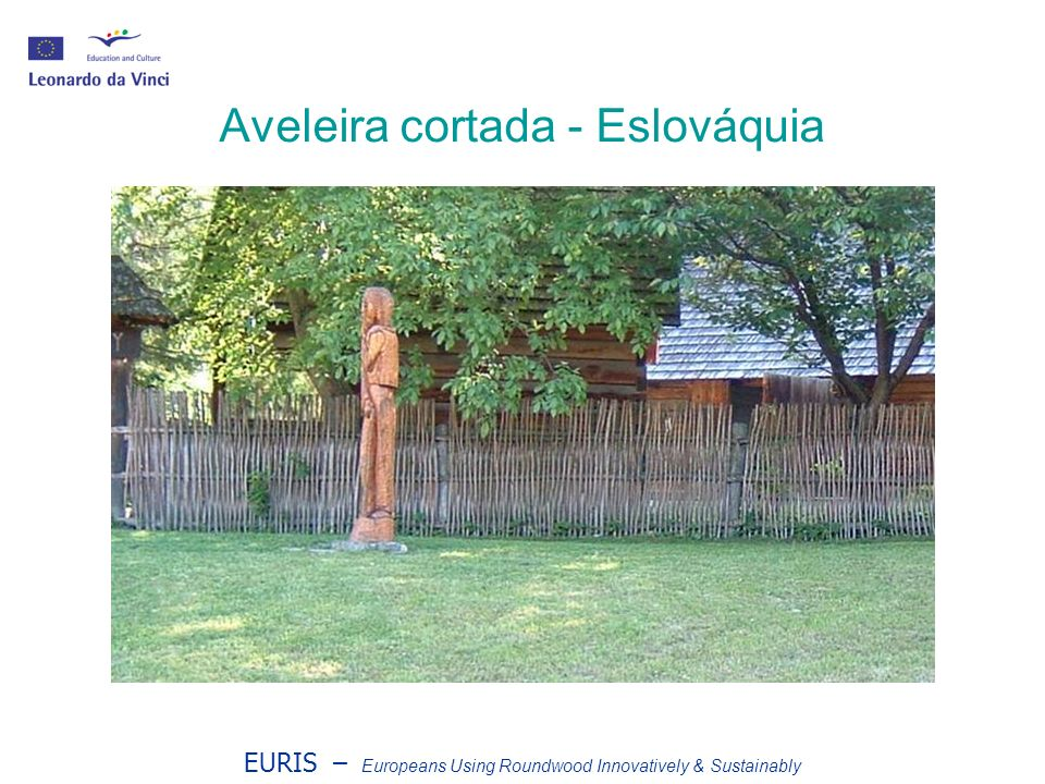 EURIS – Europeans Using Roundwood Innovatively & Sustainably Aveleira cortada - Eslováquia