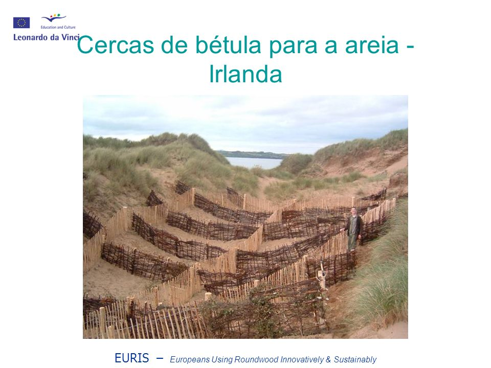 EURIS – Europeans Using Roundwood Innovatively & Sustainably Cercas de bétula para a areia - Irlanda