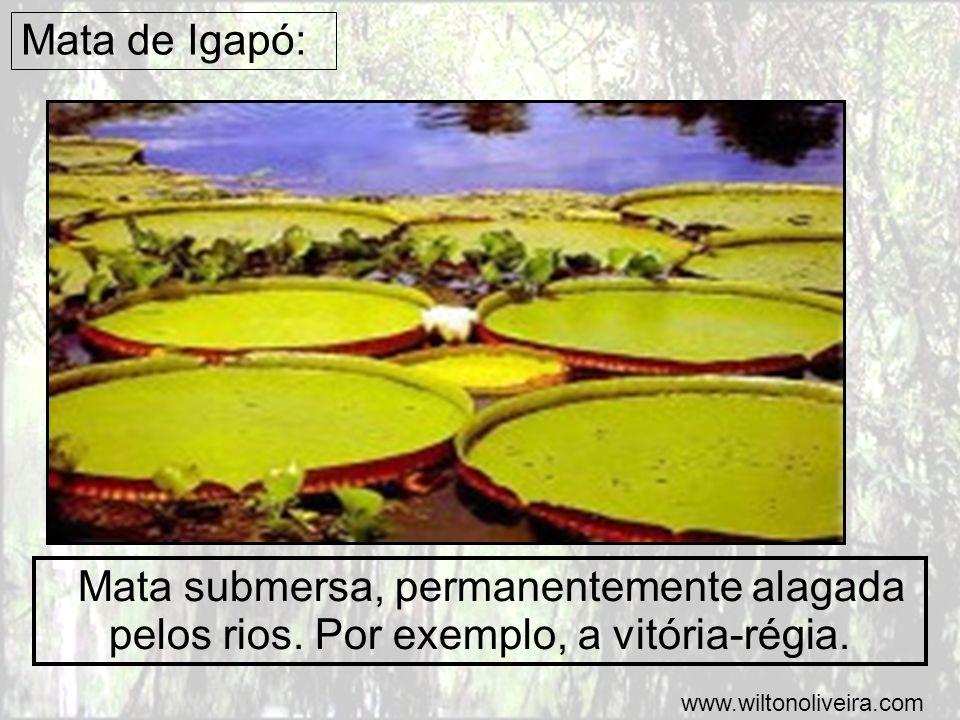Mata de Igapó: Mata submersa, permanentemente alagada pelos rios. Por exemplo, a vitória-régia. www.wiltonoliveira.com