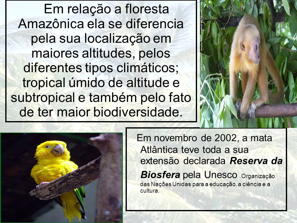 Em relação a floresta Amazônica ela se diferencia pela sua localização em maiores altitudes, pelos diferentes tipos climáticos; tropical úmido de alti