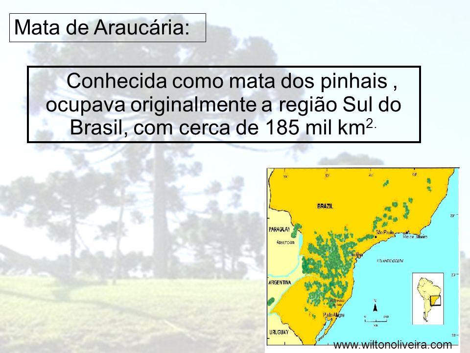 Mata de Araucária: Conhecida como mata dos pinhais, ocupava originalmente a região Sul do Brasil, com cerca de 185 mil km 2. www.wiltonoliveira.com