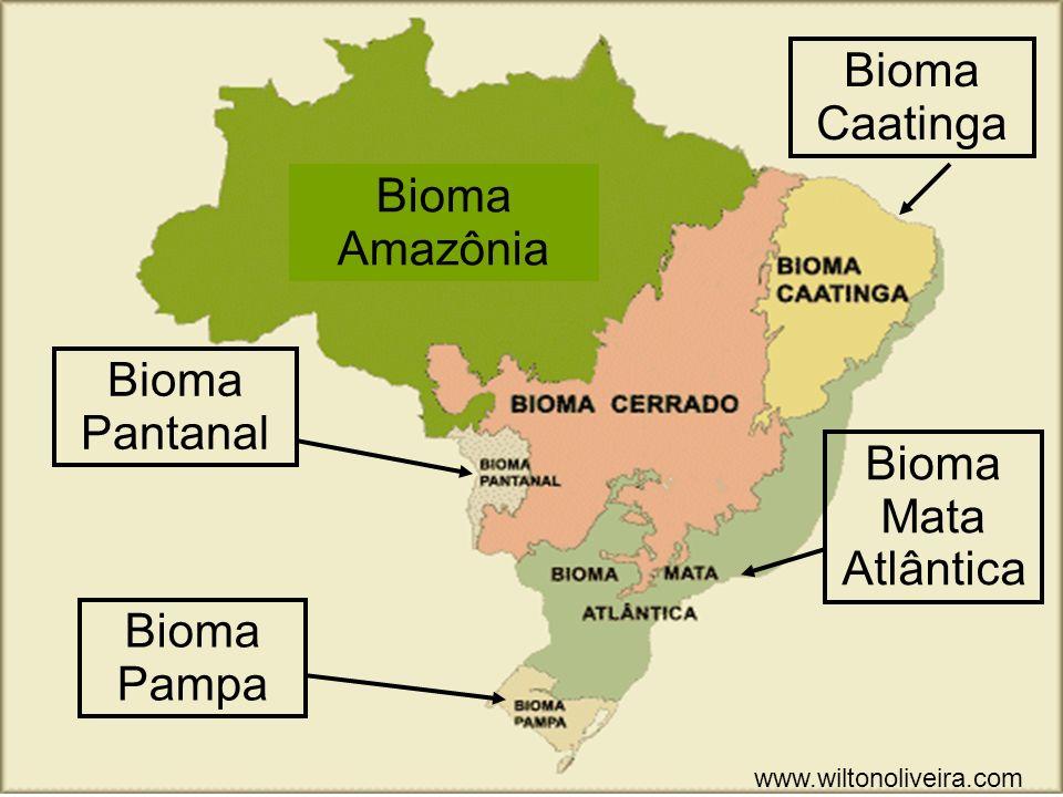 Bioma Pampa Bioma Pantanal Bioma Caatinga Bioma Mata Atlântica Bioma Amazônia www.wiltonoliveira.com