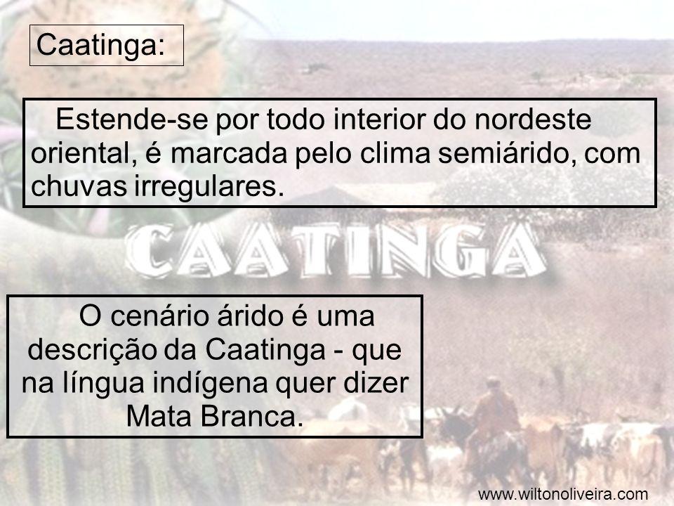 Caatinga: Estende-se por todo interior do nordeste oriental, é marcada pelo clima semiárido, com chuvas irregulares. O cenário árido é uma descrição d