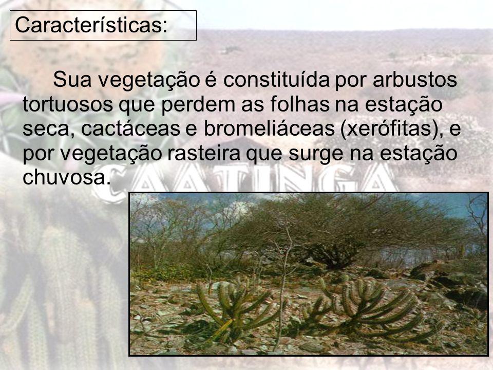 Características: Sua vegetação é constituída por arbustos tortuosos que perdem as folhas na estação seca, cactáceas e bromeliáceas (xerófitas), e por