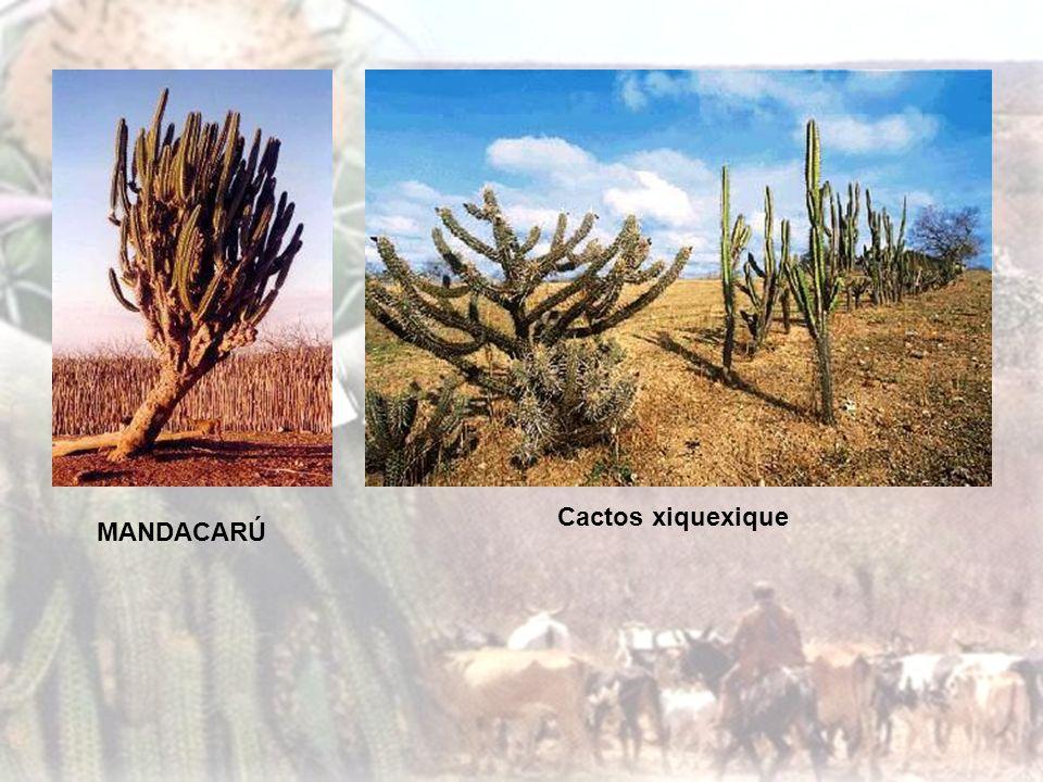 O Cerrado: É o segundo bioma mais extenso do Brasil, localizado nas regiões Centro-oeste, Nordeste e Sudeste. A região se tornou um grande produtora d