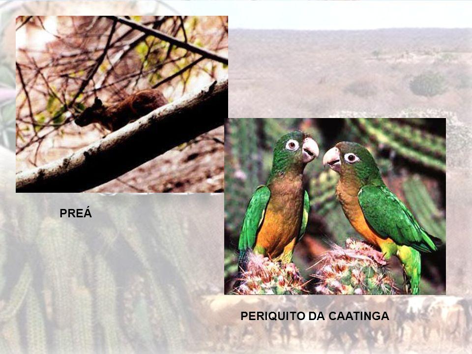 Características: A sua formação vegetal está associado ao clima tropical continental. Sua forma está apresentada por árvores de pequeno porte com galh