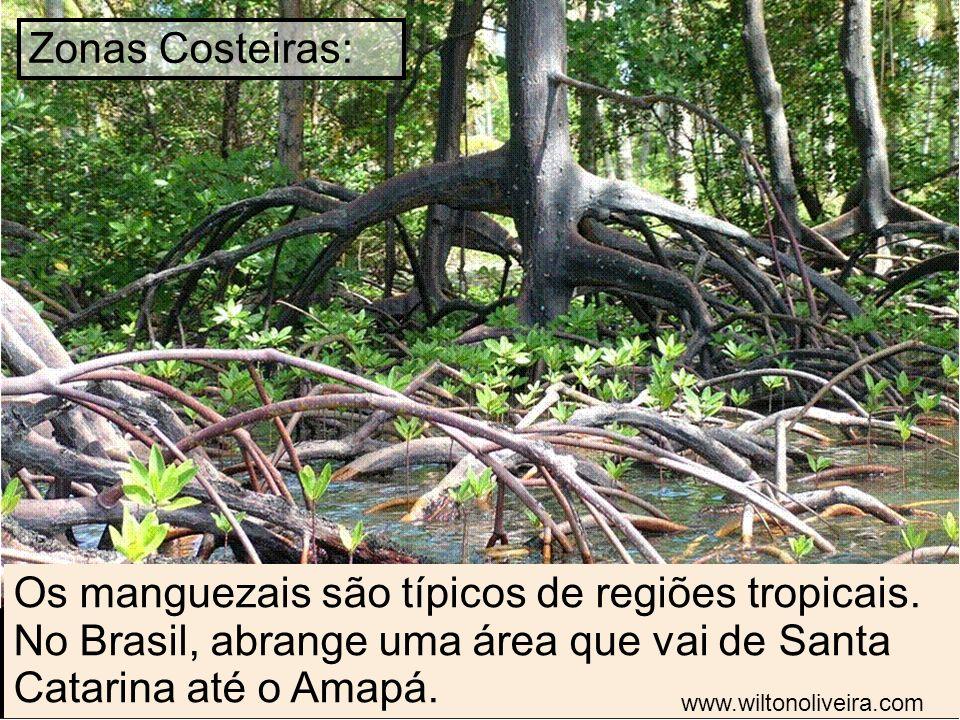 Os manguezais são típicos de regiões tropicais. No Brasil, abrange uma área que vai de Santa Catarina até o Amapá. Zonas Costeiras: www.wiltonoliveira