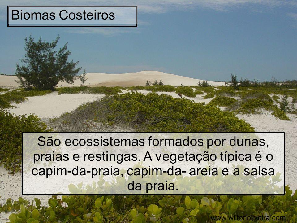 Biomas Costeiros São ecossistemas formados por dunas, praias e restingas. A vegetação típica é o capim-da-praia, capim-da- areia e a salsa da praia. w