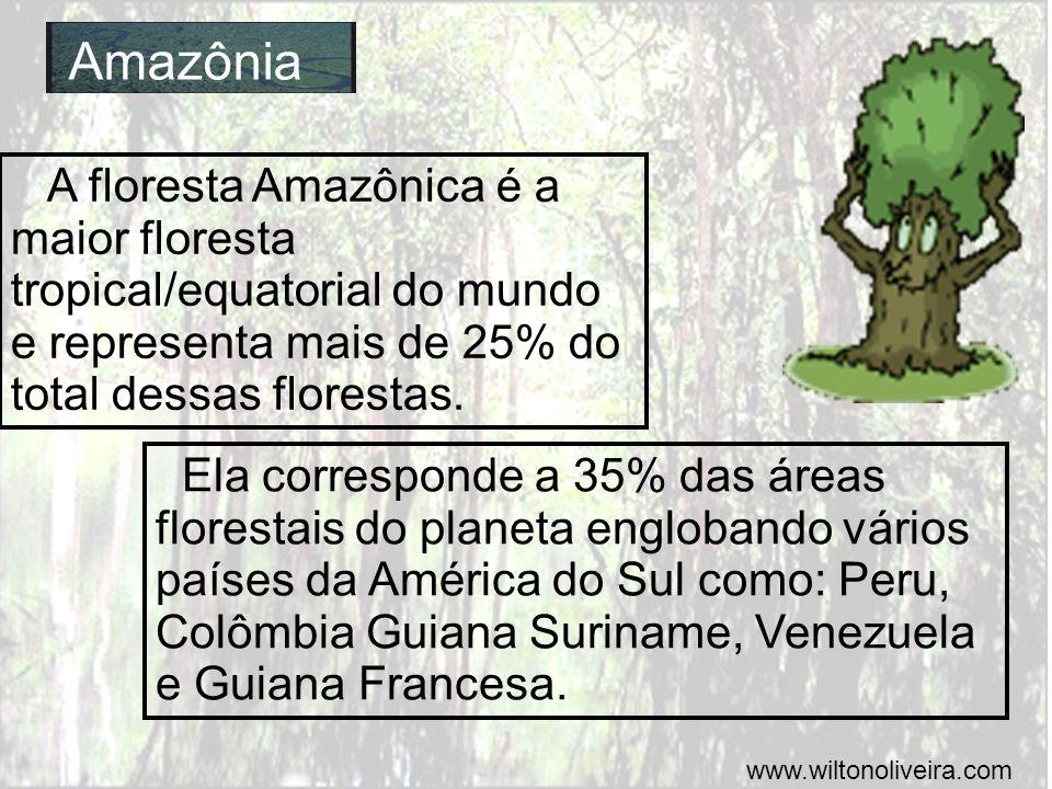 Amazônia A floresta Amazônica é a maior floresta tropical/equatorial do mundo e representa mais de 25% do total dessas florestas. Ela corresponde a 35