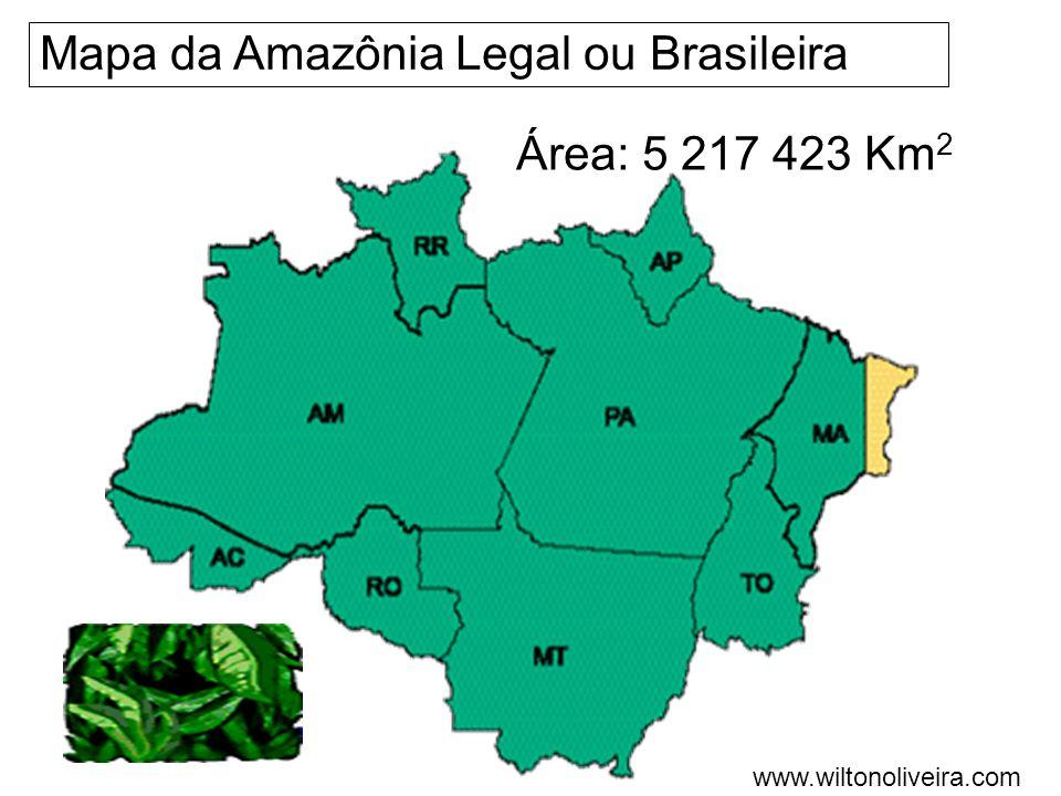 Características da Amazônia: É composta por florestas latifoliadas, é perene, heterogênea e densa.