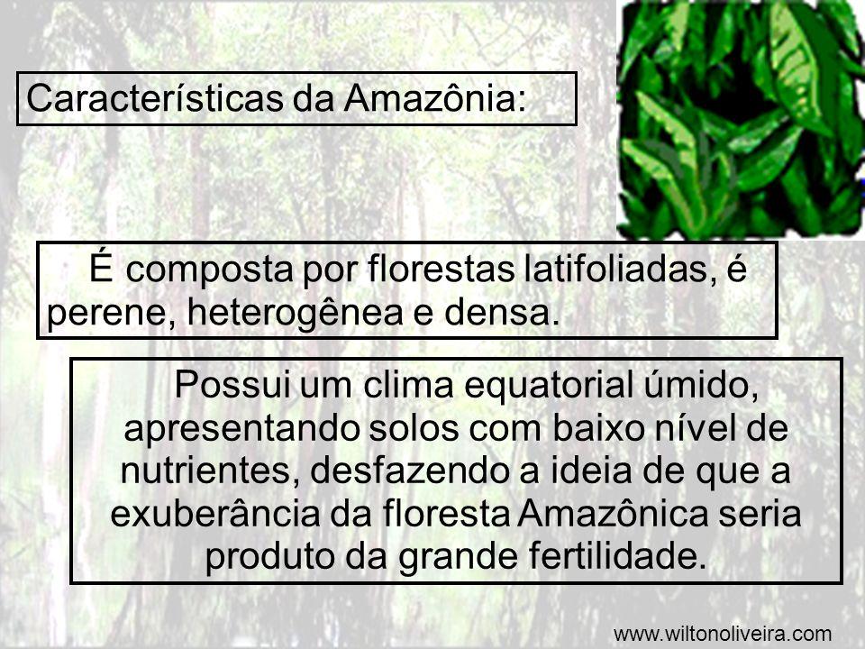 Campos Sulinos É uma vegetação predominantemente herbácea, comuns em áreas planas e de clima subtropical.