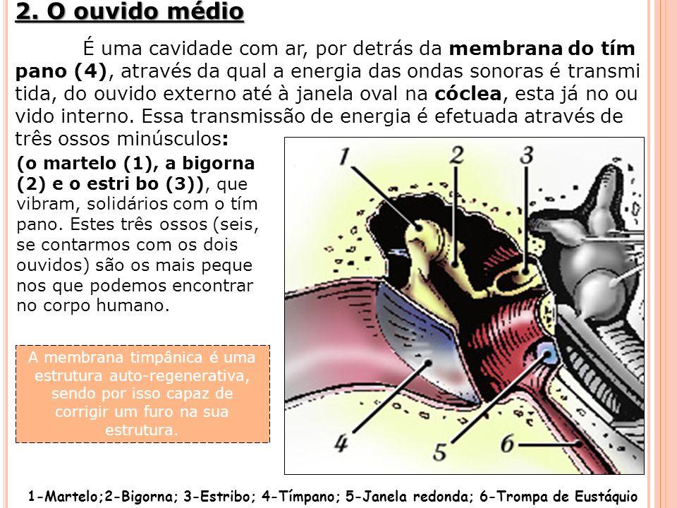 É uma cavidade com ar, por detrás da membrana do tím pano (4), através da qual a energia das ondas sonoras é transmi tida, do ouvido externo até à jan