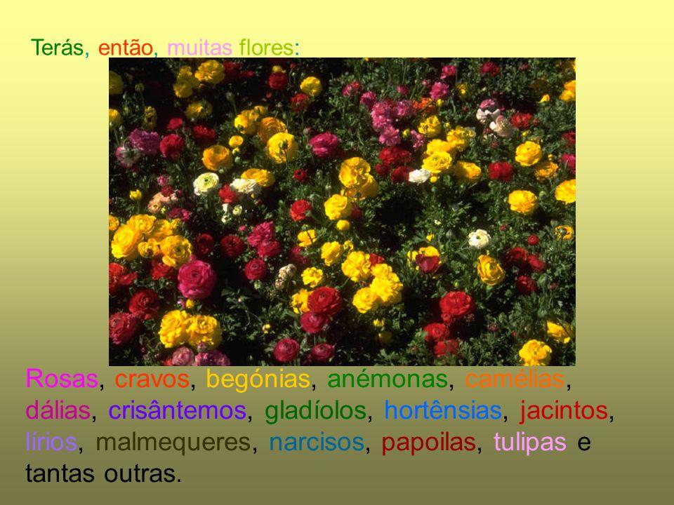 Terás, então, muitas flores: Rosas, cravos, begónias, anémonas, camélias, dálias, crisântemos, gladíolos, hortênsias, jacintos, lírios, malmequeres, n