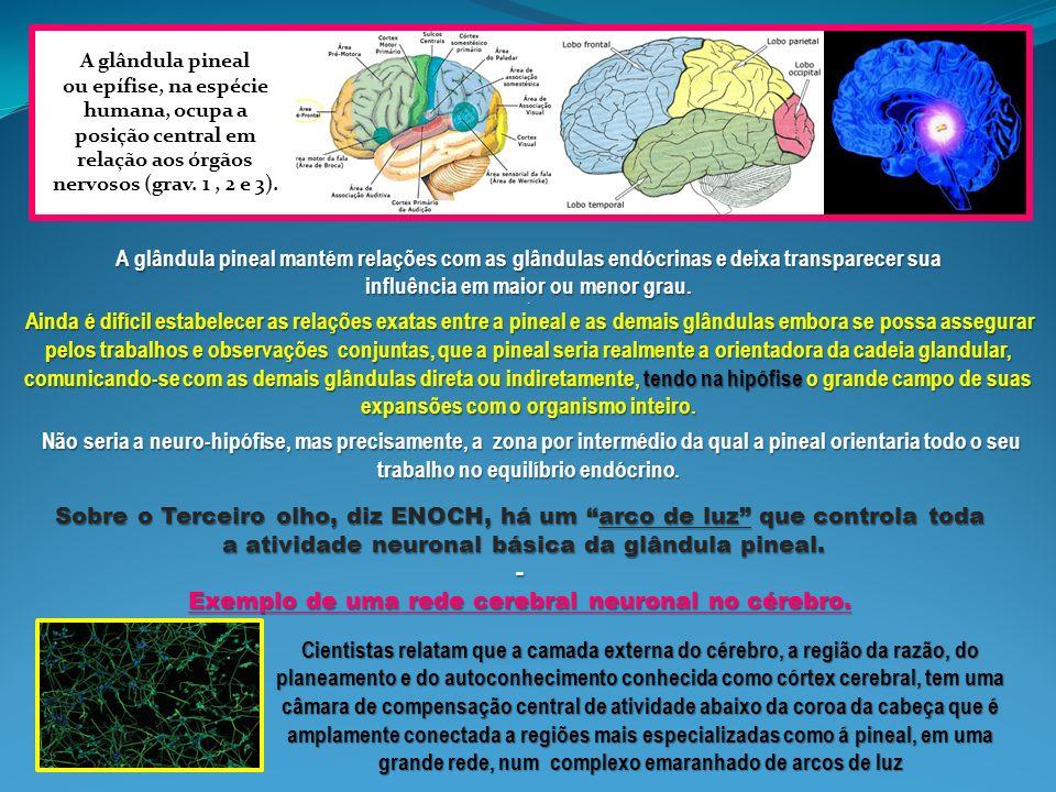 O arco de luz penetra no cérebro através do Terceiro olho, em direcção á glândula pineal, porque o 3º olho controla toda a síntese de luz conetada com o córtex cerebral.