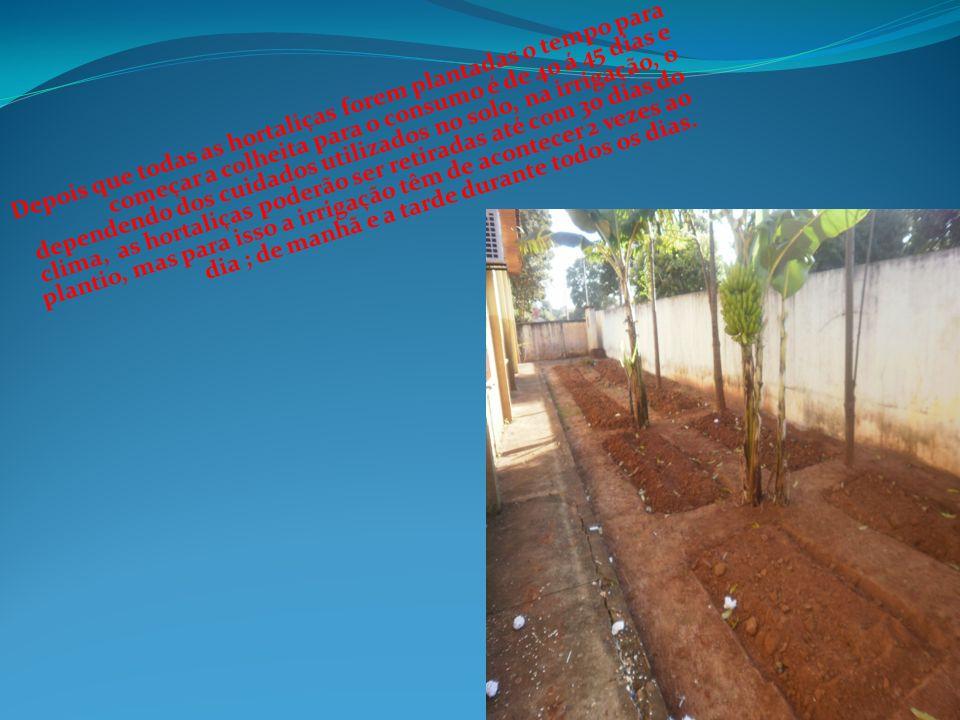 Depois que todas as hortaliças forem plantadas o tempo para começar a colheita para o consumo é de 40 á 45 dias e dependendo dos cuidados utilizados n