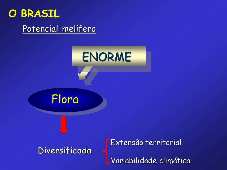 Flora Diversificada Extensão territorial Variabilidade climática Potencial melífero ENORME O BRASIL