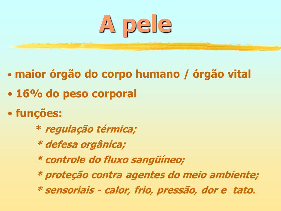 A pele maior órgão do corpo humano / órgão vital 16% do peso corporal funções: * regulação térmica; * defesa orgânica; * controle do fluxo sangüíneo;