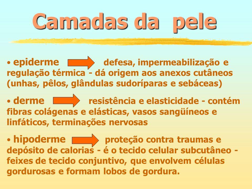 Onicomicoses Descolamento da borda livreLeuconíquea (manchas brancas) Destruição e deformidades Espessamento (unhas em telha) Onicomicoses