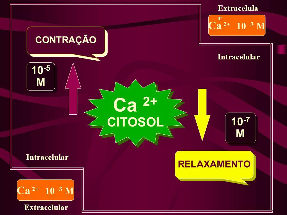 Viabilidade & Trombólise PTCA/CABG (49) PTCA/CABG (49)