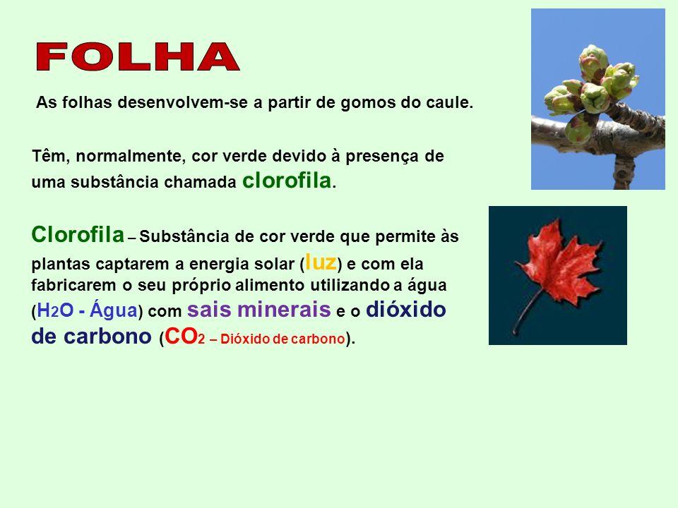 Clorofila – Substância de cor verde que permite às plantas captarem a energia solar ( luz ) e com ela fabricarem o seu próprio alimento utilizando a á