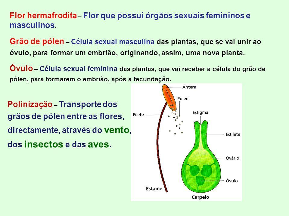 Flor hermafrodita – Flor que possui órgãos sexuais femininos e masculinos. Grão de pólen – Célula sexual masculina das plantas, que se vai unir ao óvu