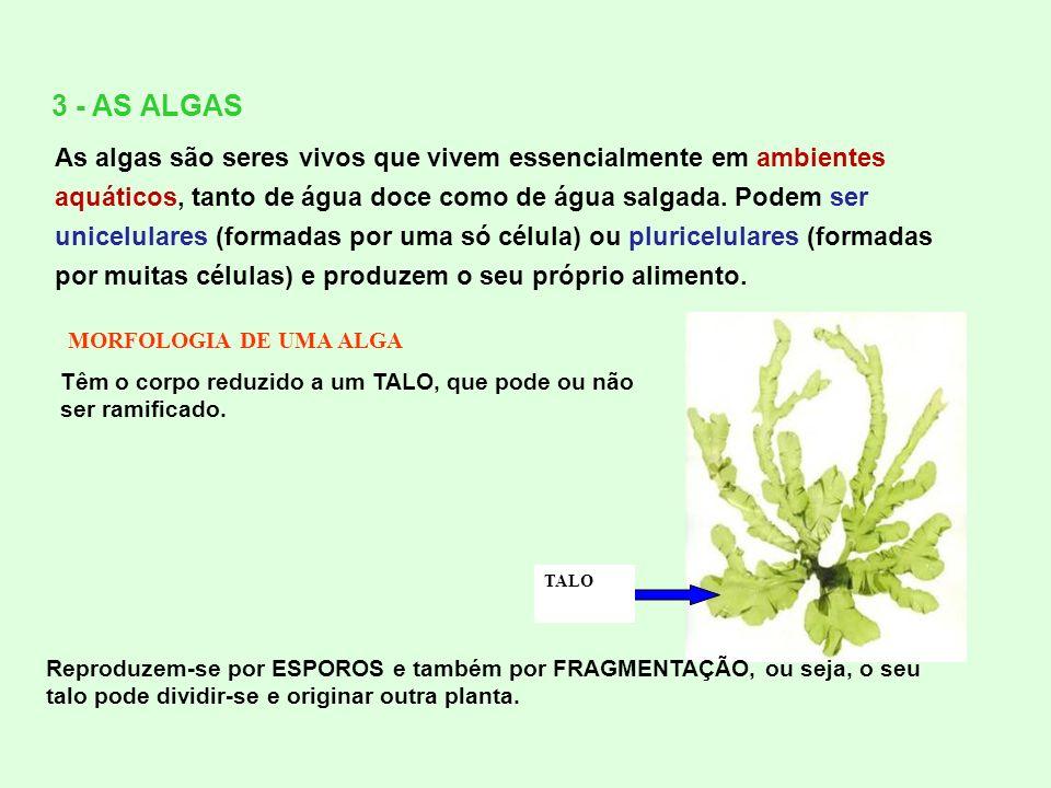 3 - AS ALGAS As algas são seres vivos que vivem essencialmente em ambientes aquáticos, tanto de água doce como de água salgada. Podem ser unicelulares