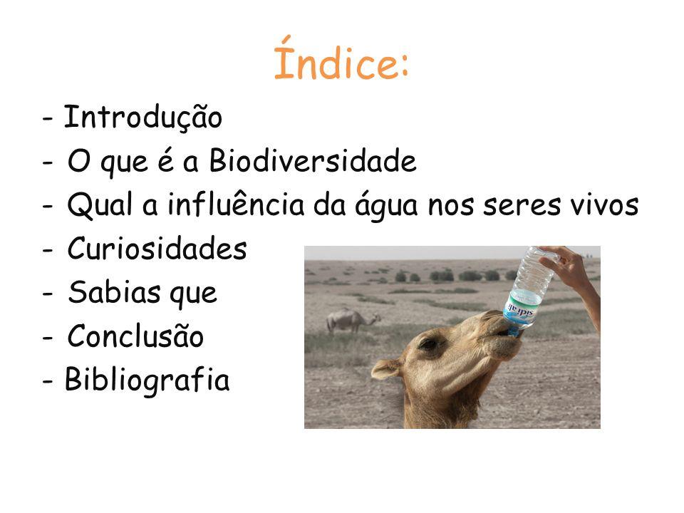 Índice: - Introdução -O que é a Biodiversidade -Qual a influência da água nos seres vivos -Curiosidades -Sabias que -Conclusão - Bibliografia