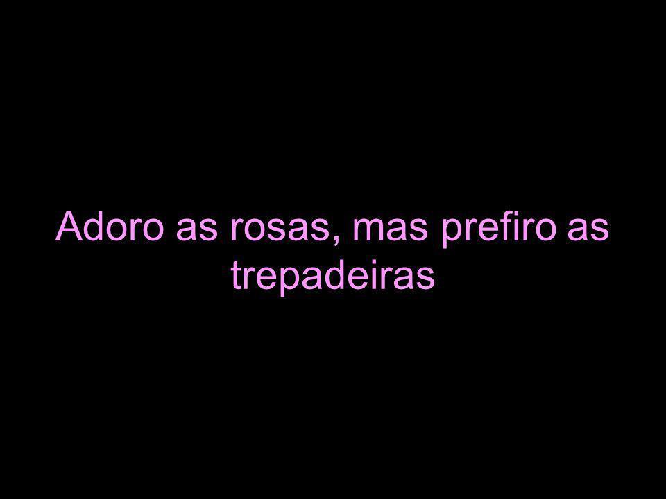 Adoro as rosas, mas prefiro as trepadeiras