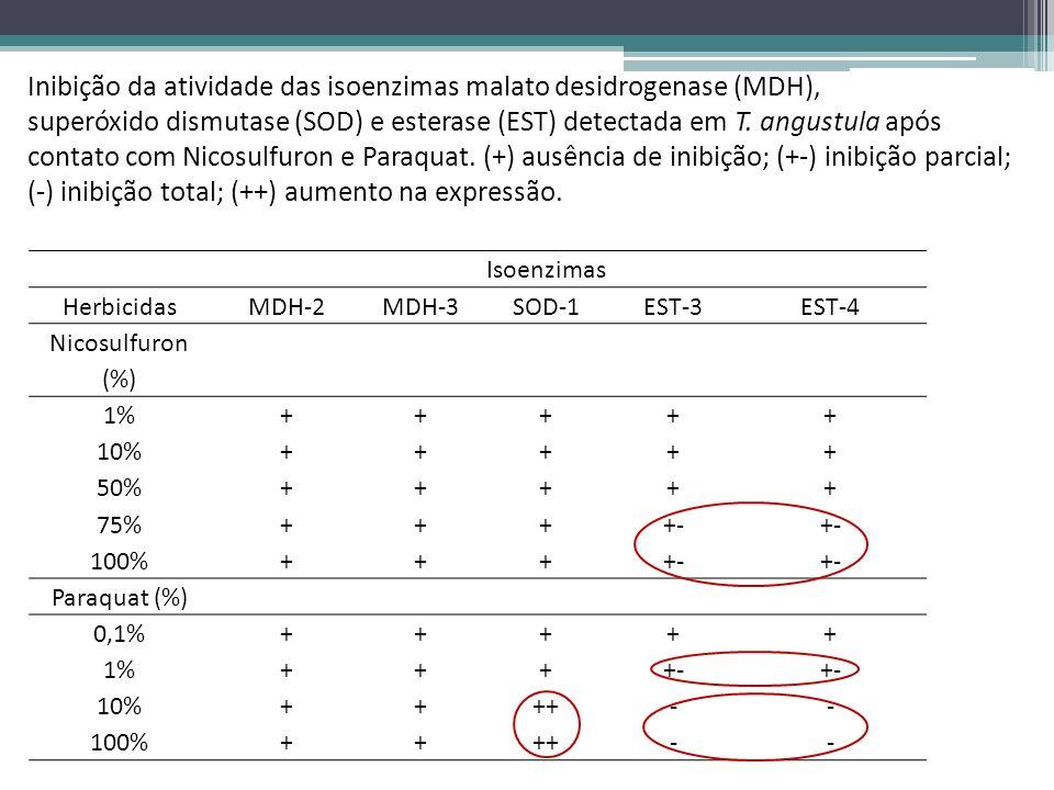 Isoenzimas HerbicidasMDH-2MDH-3SOD-1EST-3EST-4 Nicosulfuron (%) 1%+++++ 10%+++++ 50%+++++ 75%++++- 100%++++- Paraquat (%) 0,1%+++++ 1%++++- 10%++++--