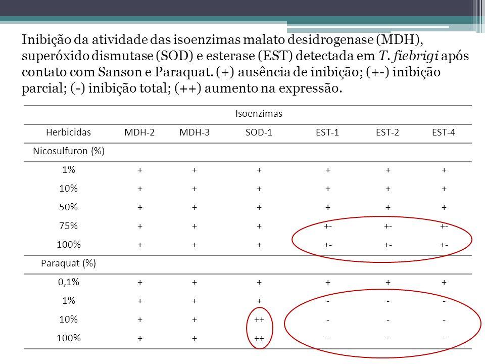 Isoenzimas HerbicidasMDH-2MDH-3SOD-1EST-1EST-2EST-4 Nicosulfuron (%) 1%++++++ 10%++++++ 50%++++++ 75%++++- 100%++++- Paraquat (%) 0,1%++++++ 1%+++---