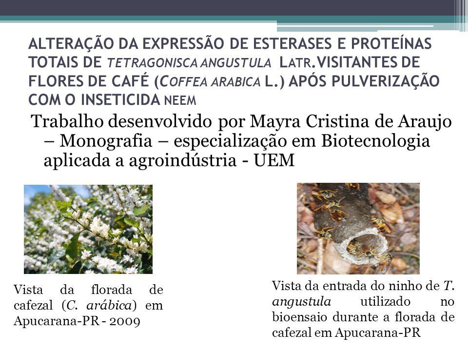 ALTERAÇÃO DA EXPRESSÃO DE ESTERASES E PROTEÍNAS TOTAIS DE TETRAGONISCA ANGUSTULA L ATR.VISITANTES DE FLORES DE CAFÉ (C OFFEA ARABICA L.) APÓS PULVERIZ