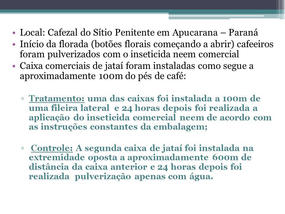 Local: Cafezal do Sítio Penitente em Apucarana – Paraná Início da florada (botões florais começando a abrir) cafeeiros foram pulverizados com o inseti