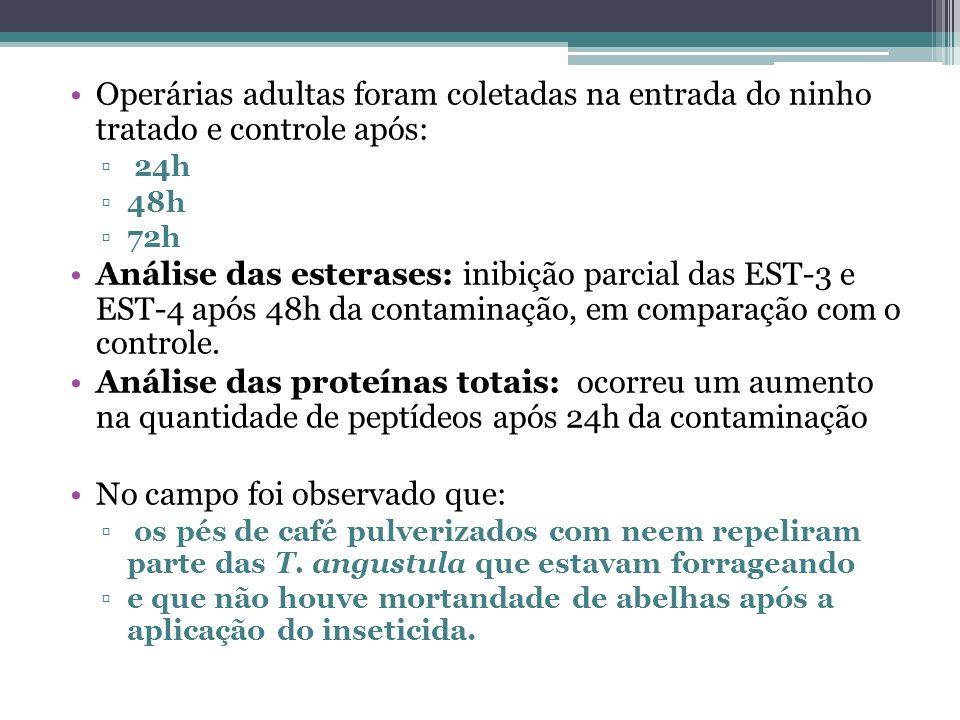 Operárias adultas foram coletadas na entrada do ninho tratado e controle após: 24h 48h 72h Análise das esterases: inibição parcial das EST-3 e EST-4 a