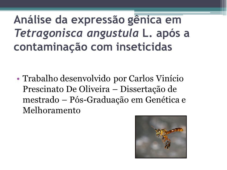 Análise da expressão gênica em Tetragonisca angustula L. após a contaminação com inseticidas Trabalho desenvolvido por Carlos Vinício Prescinato De Ol