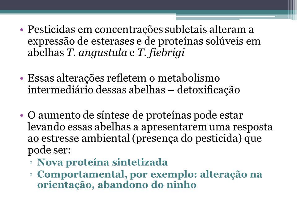 Pesticidas em concentrações subletais alteram a expressão de esterases e de proteínas solúveis em abelhas T. angustula e T. fiebrigi Essas alterações