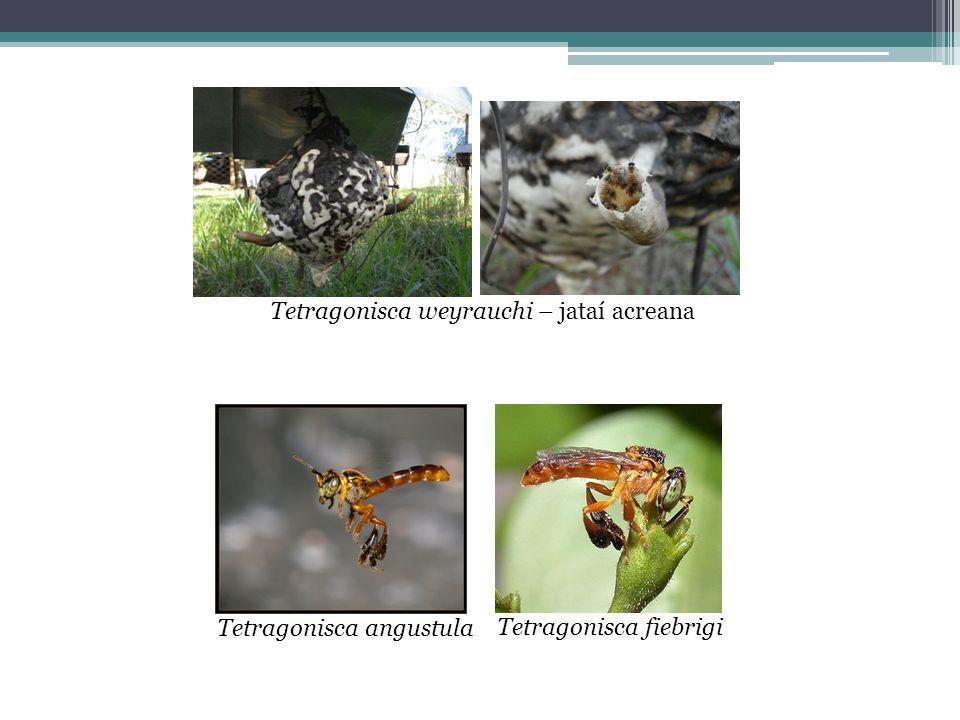 Quatro classes de agrotóxicos de acordo com a CL50 para abelhas: Classe 1- extremamente tóxicos CL50 > 2μg/abelha Classe 2- altamente tóxicos CL50 entre 22μg e 10,99μg/abelha Classe 3- moderadamente tóxicos CL50 entre 11μg e 100μg/abelha Classe 4- pouco tóxicos CL50 < 100μg/abelha (Larini, 1999; Hunt, 2000) Toxicidade dos inseticidas medida CL50 (concentração letal que proporciona a morte de 50% da população)