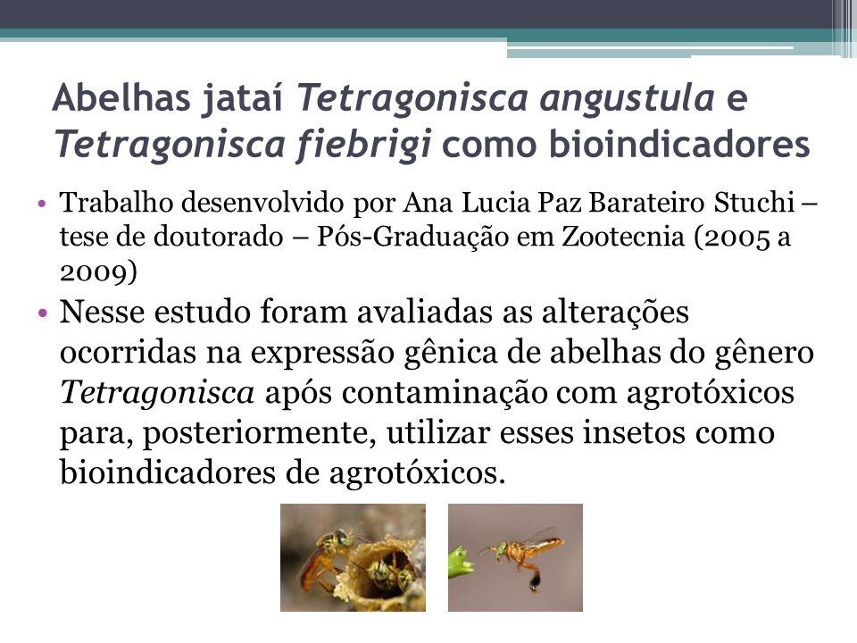 Abelhas jataí Tetragonisca angustula e Tetragonisca fiebrigi como bioindicadores Trabalho desenvolvido por Ana Lucia Paz Barateiro Stuchi – tese de do