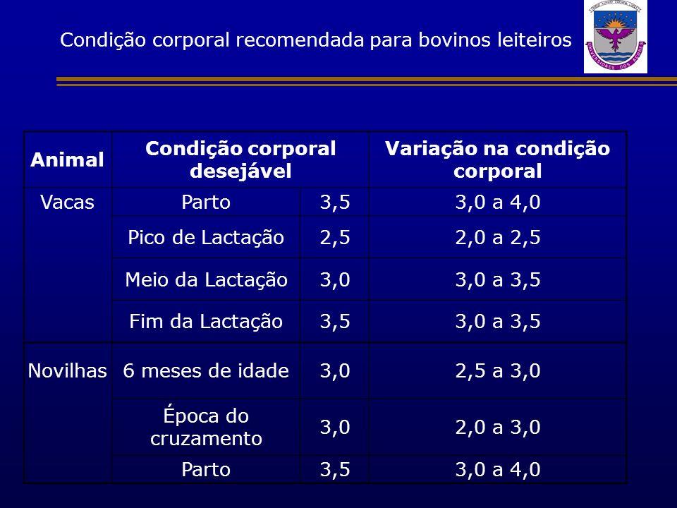 Condição corporal recomendada para bovinos leiteiros Animal Condição corporal desejável Variação na condição corporal VacasParto3,53,0 a 4,0 Pico de L