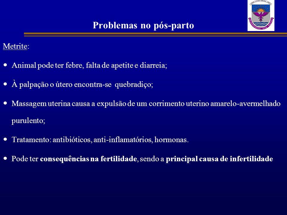 Problemas no pós-parto Metrite: Animal pode ter febre, falta de apetite e diarreia; À palpação o útero encontra-se quebradiço; Massagem uterina causa