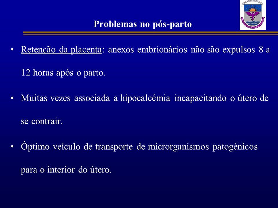 Problemas no pós-parto Retenção da placenta: anexos embrionários não são expulsos 8 a 12 horas após o parto. Muitas vezes associada a hipocalcémia inc