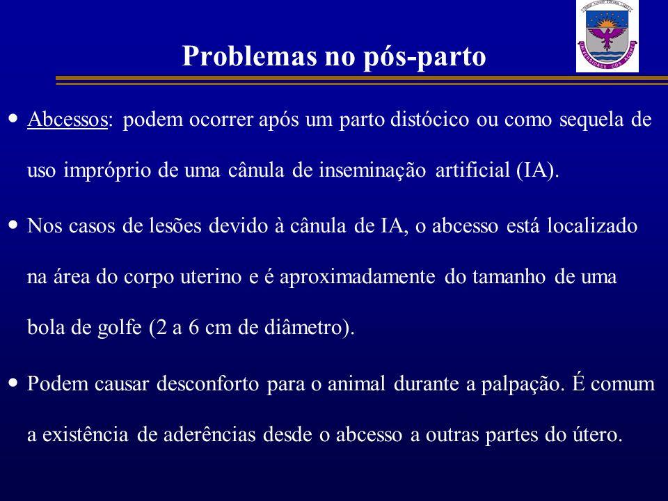 Problemas no pós-parto Abcessos: podem ocorrer após um parto distócico ou como sequela de uso impróprio de uma cânula de inseminação artificial (IA).