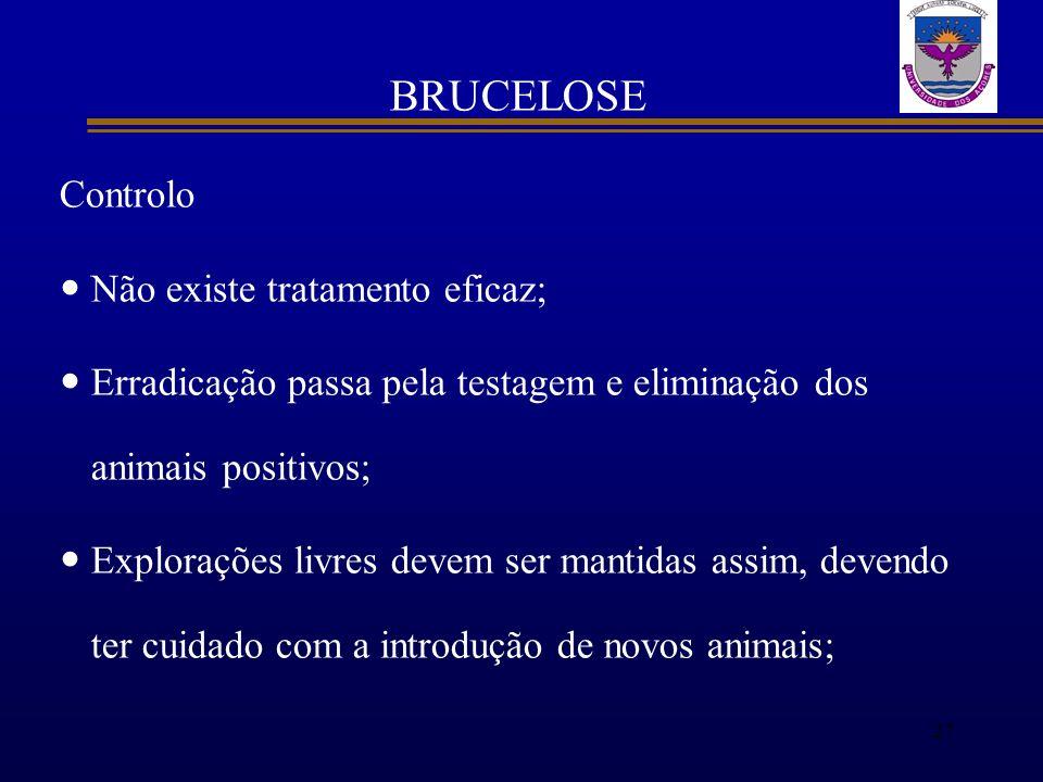 BRUCELOSE Controlo Não existe tratamento eficaz; Erradicação passa pela testagem e eliminação dos animais positivos; Explorações livres devem ser mant