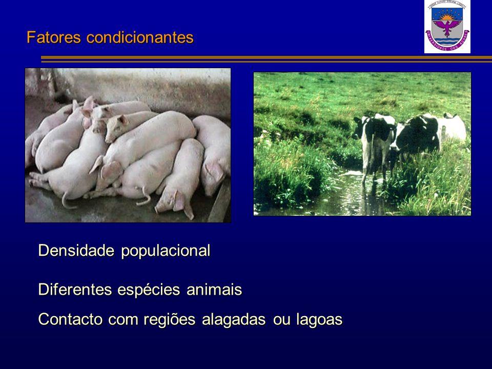 Fatores condicionantes Densidade populacional Diferentes espécies animais Contacto com regiões alagadas ou lagoas