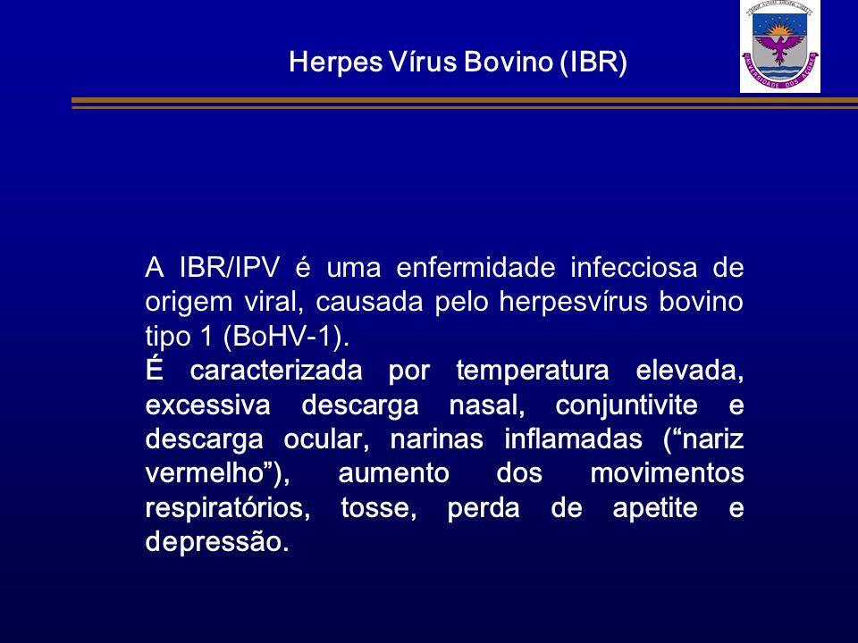 A IBR/IPV é uma enfermidade infecciosa de origem viral, causada pelo herpesvírus bovino tipo 1 (BoHV-1). É caracterizada por temperatura elevada, exce