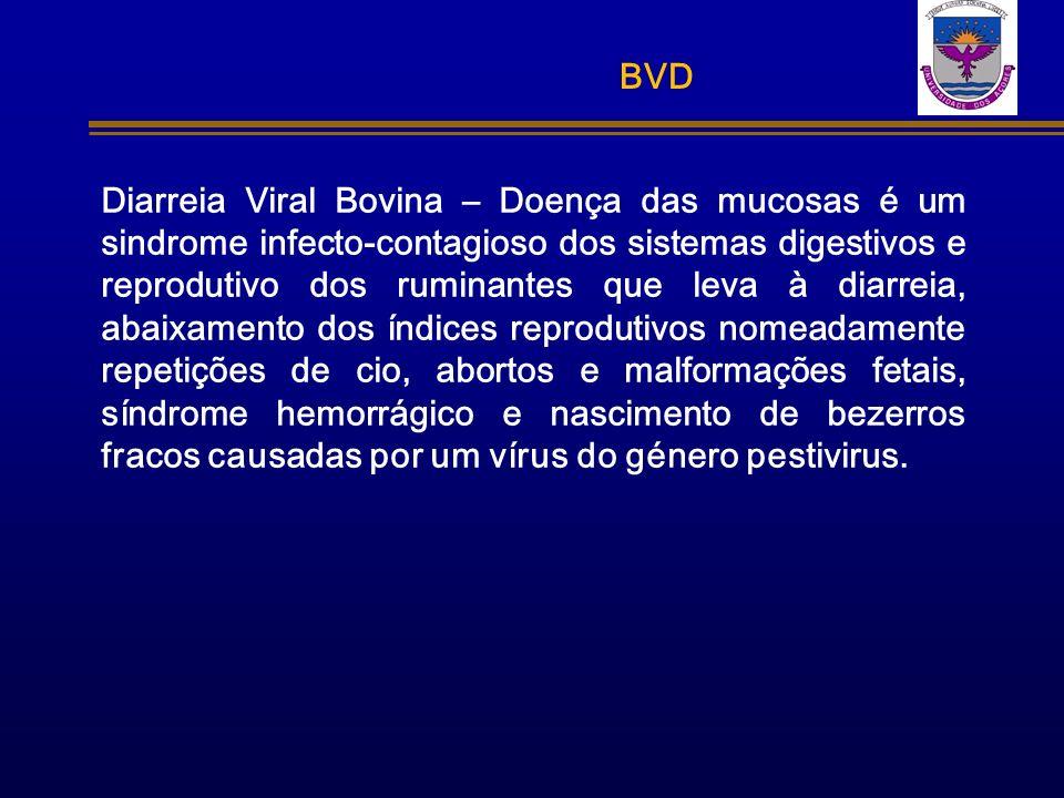 BVD Diarreia Viral Bovina – Doença das mucosas é um sindrome infecto-contagioso dos sistemas digestivos e reprodutivo dos ruminantes que leva à diarre
