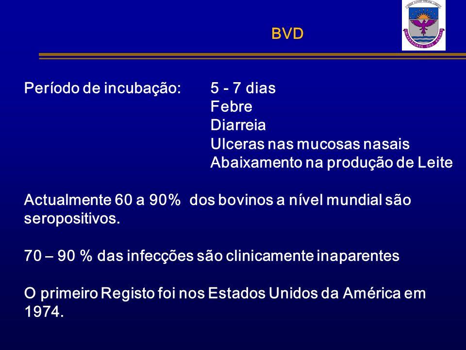 BVD Período de incubação: 5 - 7 dias Febre Diarreia Ulceras nas mucosas nasais Abaixamento na produção de Leite Actualmente 60 a 90% dos bovinos a nív