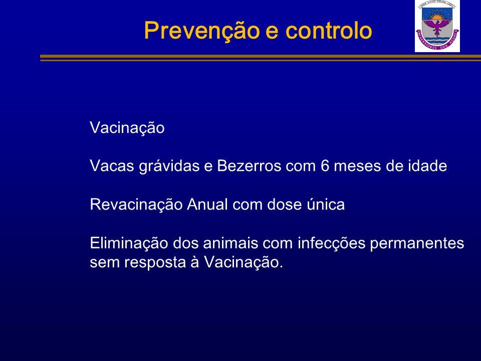 Prevenção e controlo Vacinação Vacas grávidas e Bezerros com 6 meses de idade Revacinação Anual com dose única Eliminação dos animais com infecções pe