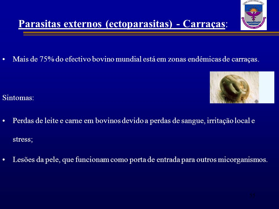 Parasitas externos (ectoparasitas) - Carraças: Mais de 75% do efectivo bovino mundial está em zonas endémicas de carraças. Sintomas: Perdas de leite e