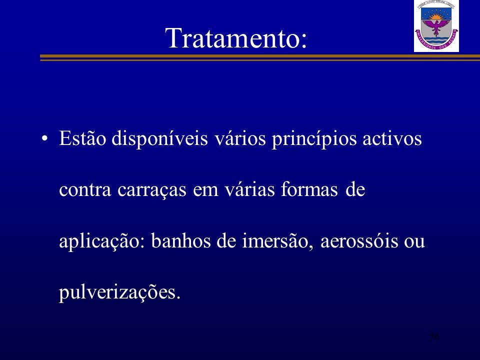 Tratamento: Estão disponíveis vários princípios activos contra carraças em várias formas de aplicação: banhos de imersão, aerossóis ou pulverizações.